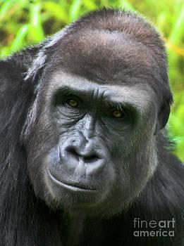 Gary Gingrich Galleries - Gorilla-9836