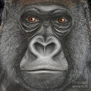 Western Lowland Gorilla face - fine art print - stock illustration - stock image  by Urft Valley Art