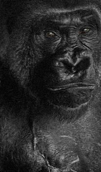 Ray Van Gundy - Gorilla Scars