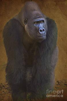 Heiko Koehrer-Wagner - Gorilla the Muscleman