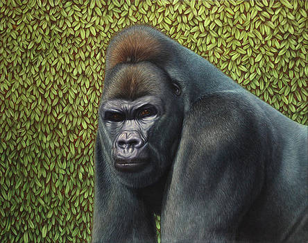 James W Johnson - Gorilla with a Hedge