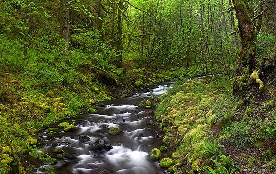 Gorton Creek by David  Forster