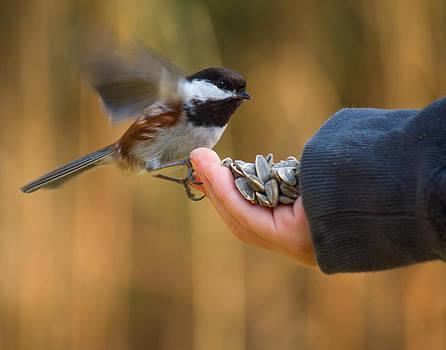 Got Seed? by Julie Jamieson