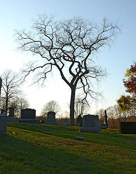 Goulish Cemetery Tree by Dave Saltonstall