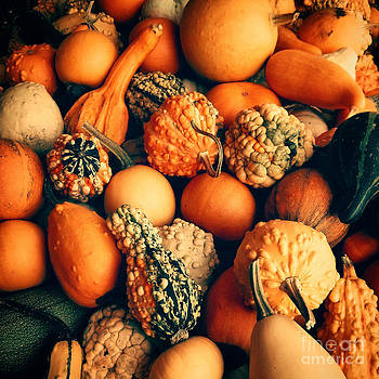 Lauren Williamson - Gourd