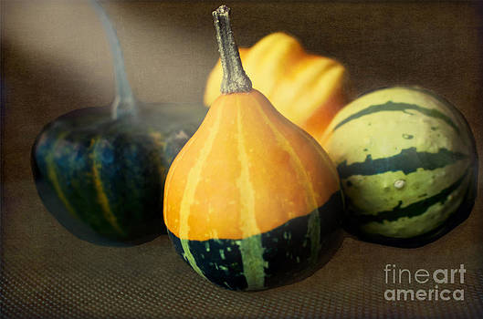 Gourds Aglow by Maria Janicki
