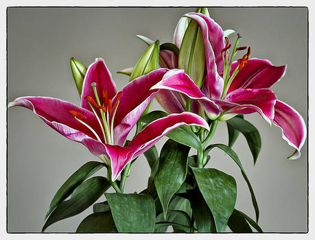 Graceful Lilies by Linda Tiepelman
