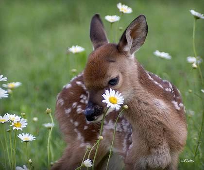 Gracie Flowers by Bill Stephens