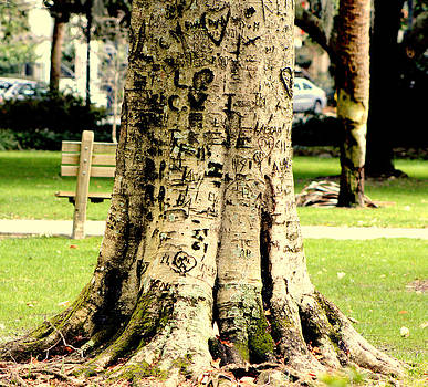 Graffiti Tree by Pete Dionne