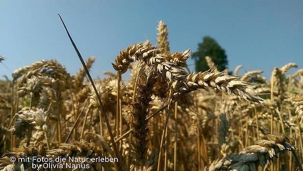 Grain photography by Olivia Narius