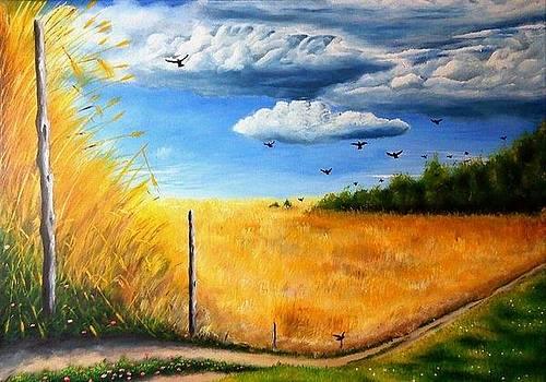 Grainfield by Danas Zymonas