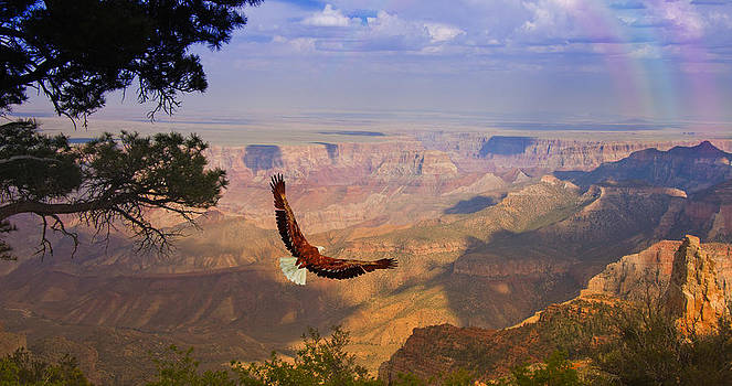 Grand Canyon Eagle by Bruce Rolff