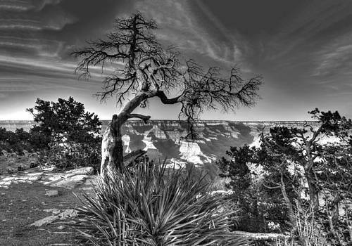 Grand Canyon Lone Tree by Gej Jones