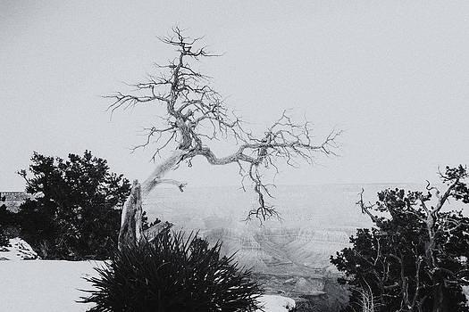 Grand Canyon - Snow Storm by Gej Jones