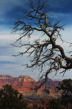 Grand Canyon Tree by Valerie Loop