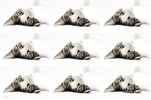 Andee Design - Grand Kitty Cuteness BW 9
