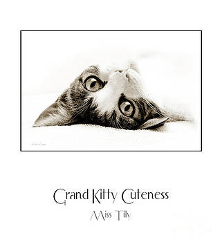 Andee Design - Grand Kitty Cuteness Miss Tilly Poster