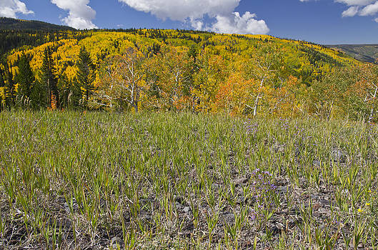 Grand Mesa - 8099 by Jerry Owens