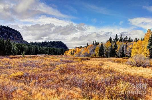 Bob Hislop - Grand Mesa Colors