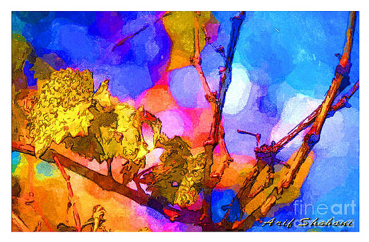 Grape Leaves In My Garden  Autumn  2009 by Arif Zenun Shabani