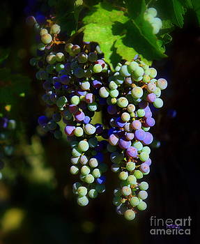 Patrick Witz - Grape Pre-Vino