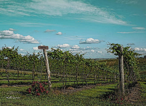 Grape Vines by Jeff Swanson