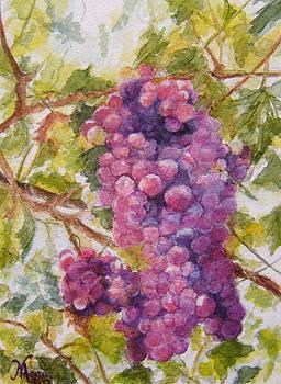 Grapes by Maria Varga-Hansen
