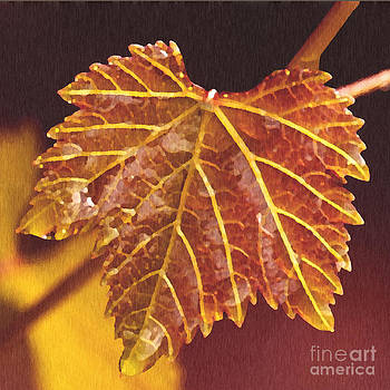 Artist and Photographer Laura Wrede - Grapevine in Fall