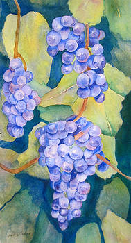 Grapevine by Pat Vickers