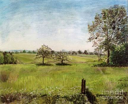 Aditi Bhatt - Grass