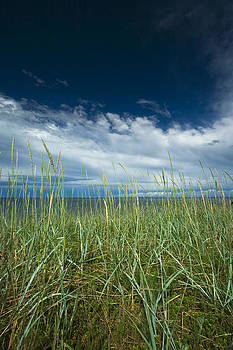 Grass and the blue sky by Anna Grigorjeva