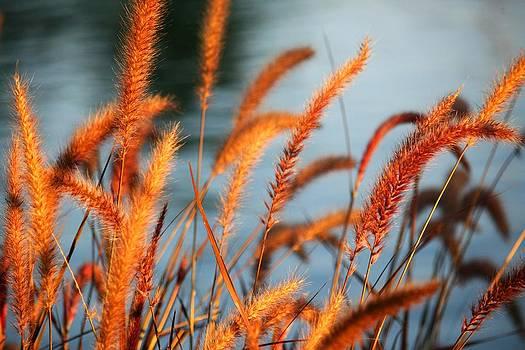 Veronica Vandenburg - Grass and Water