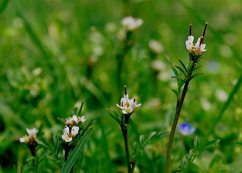 Grass blades by Marija Djedovic