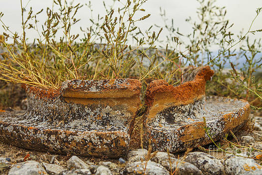 Patricia Hofmeester - Grass growing in ancient pot