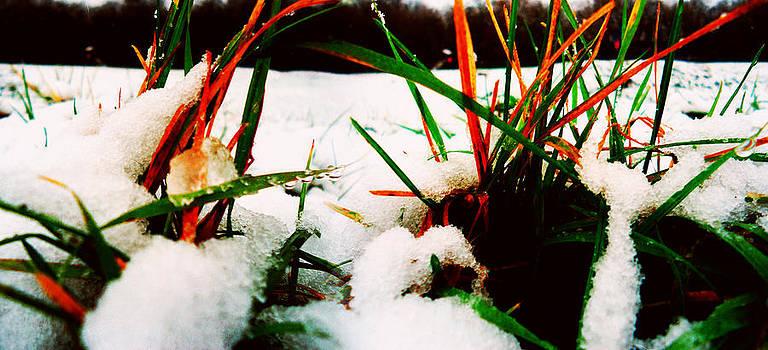 Grass In Snow by Florin Birjoveanu