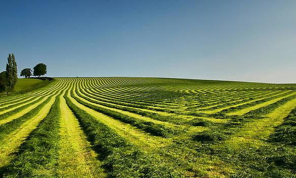 Grass lines by Pete Hemington