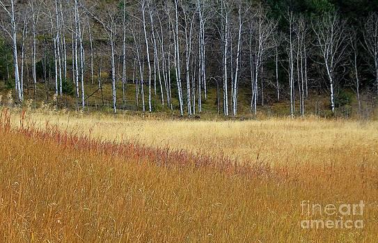 Roland Stanke - grass lines