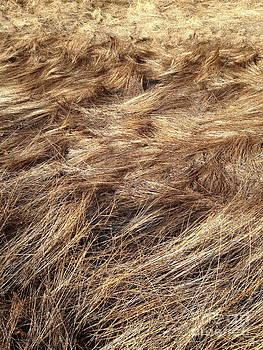 Grass  by Mark Messenger