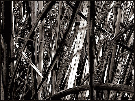 Grasses 2 by Colleen Cannon