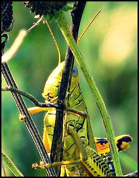Grasshopper Up Close by Susan Olga Linville
