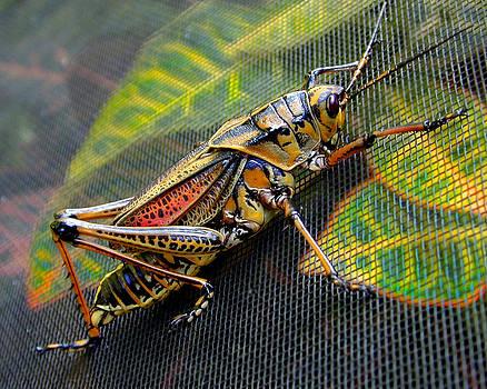 Grasshopper by Wayne Ritt