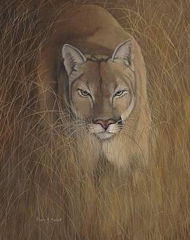 GRASSLANDS SHADOW - Cougar by Patricia Mansell
