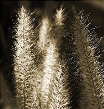 Grassy by Chet King