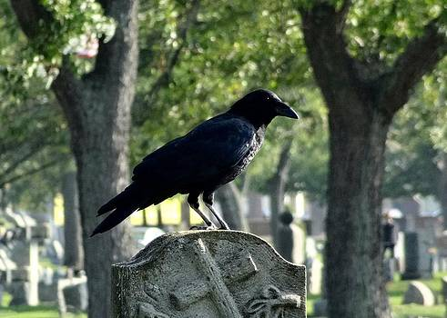 Gothicrow Images - Graveyard Bird On Top Of A Tombstone
