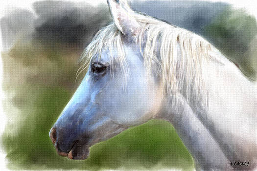Gray Arabian Portrait by Bethany Caskey