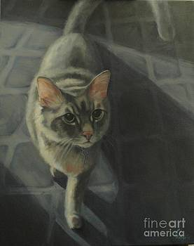 Gray Cat by Pet Whimsy  Portraits