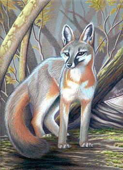 Gray Fox by Angela DeRiso