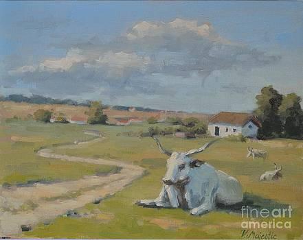 Gray Oxen by Viktoria K Majestic