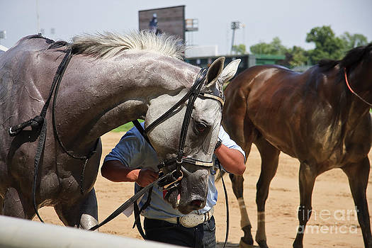 Jill Lang - Gray Race Horse