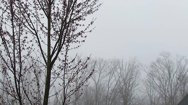 Gray Sky by Pamela Morrow